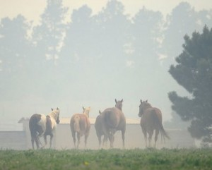 Miles away - Horses at LDR Photo courtesy of Cindy Houghton